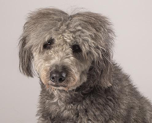akron-cleveland-pet-photographer-animal-photography